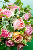 Pink roses and Green ivy Stock Photos