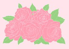 Pink roses with green leaves close-up Stock Images