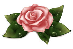 Pink roses with green leaves in the shape of heart illustration Stock Photos