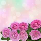 Pink roses greeting card Royalty Free Stock Photo