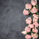 Pink roses on grey background Stock Image