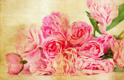 Pink roses on grunge background Royalty Free Stock Photography