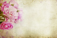 Pink roses on grunge background Stock Images