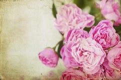 Pink roses on grunge background Stock Photos