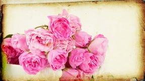 Pink roses on grunge background Royalty Free Stock Photo