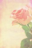Pink roses grungy background Royalty Free Stock Photography