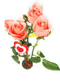 Pink roses and heart on a white background. Three pink roses with drops of water and the red heart from fabric fixed on a stalk. It is isolated on white, the Royalty Free Stock Images