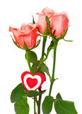 Pink roses and heart on a white background. Three pink roses with drops of water and the red heart from fabric fixed on a stalk. It is isolated on white Royalty Free Stock Photography