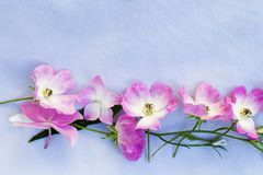 Pink roses and hortensia on farbic background Stock Photography