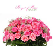 Pink Roses. Huge Bouquet isolated on white background Stock Photos