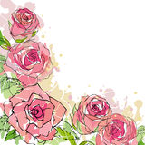 Pink roses illustration card. Hand drawing illustration of roses Stock Images