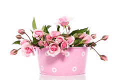 Pink Roses In A Pink Flowerpot Royalty Free Stock Photo