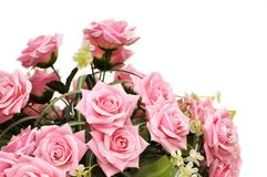 Pink roses isolated on the white background. Pink roses isolated  on the white background Royalty Free Stock Photo