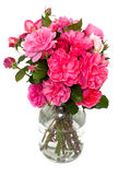 Pink roses in a jar Royalty Free Stock Photography