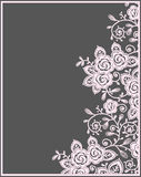 Pink roses lace Card. Stock Images