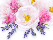 Pink roses and lavender bouquet stock images