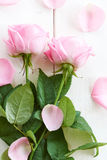 Pink roses and leaves on painted wood. Pink roses and leaves on white wood - series Stock Image