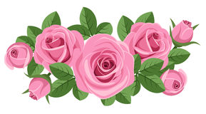 Pink roses with leaves on white. Royalty Free Stock Image