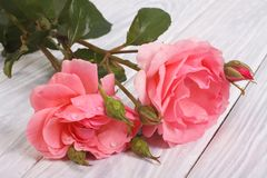 Pink roses on a light wooden table Royalty Free Stock Photography