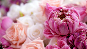 Pink roses and lotuses flower romantic valentine background with Royalty Free Stock Photography