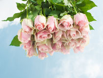 Pink roses on a mirror. Pink roses on a mirror with sky reflection Royalty Free Stock Image