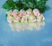 Pink roses on a mirror. Pink roses on a mirror with sky reflection. Drops Stock Photography