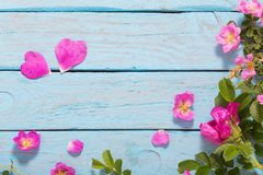 Pink roses on old blue table royalty free stock image