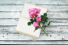 Pink roses on open blank book Stock Photography