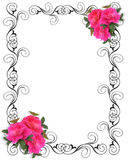 Pink Roses Ornamental Border vector illustration