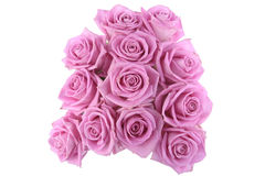 pink roses over white background Royalty Free Stock Photography