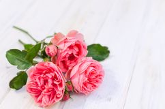 Pink roses over white wooden board. Mother`s or Valentine`s day stock photo