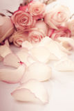 Pink roses petals Royalty Free Stock Photos