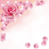 Pink roses and petals background Royalty Free Stock Photo