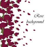 Pink Roses petals Royalty Free Stock Image