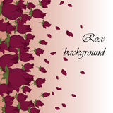 Pink Roses petals Royalty Free Stock Photo