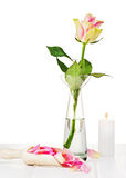 Pink roses with petals on wooden background. Stock Photos