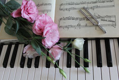 Pink roses on a piano Stock Image
