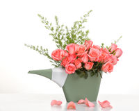 Pink roses in a plastics watering can Royalty Free Stock Image