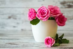 Pink Roses in a Pot Stock Images