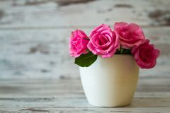 Pink Roses in a Pot Stock Image