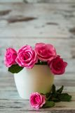 Pink Roses in a Pot Stock Photography