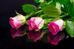 Pink roses with reflection Stock Images