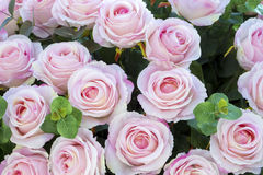 Pink Roses. Pink rose bouquet on rose petals background Royalty Free Stock Images