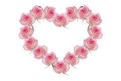 Pink roses. Rose pink flowers of the heart Royalty Free Stock Photography