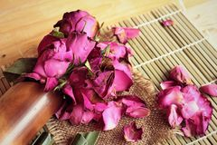 Pink roses and rose petals were sprinkled fallen. Stock Photo