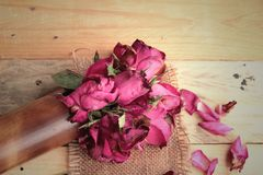 Pink roses and rose petals were sprinkled fallen. Stock Image