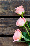 Pink Roses on a rustic wooden background Royalty Free Stock Images