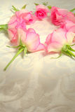 Pink roses in the shape of a circle Stock Image
