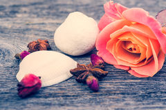 Pink roses and shell, vintage style, spa theme. Stock Photo