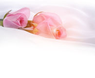Pink roses on silk Stock Photo